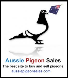 Lost & Found Racing Pigeons – Qld Racing Pigeon Federation